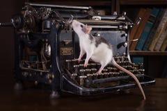 家养的鼠画象 免版税库存图片