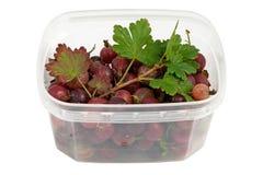 容器半鲜美鹅莓的塑料弄湿了 免版税库存图片