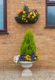 容器和垂悬的篮子与春天冬天开花的pansie 库存图片