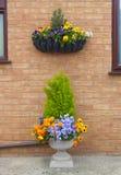 容器和垂悬的篮子与春天冬天开花的pansie 免版税库存照片