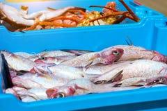 容器用抓住海鱼纤巧布拉内斯 免版税库存照片
