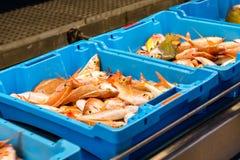 容器用抓住海鱼纤巧布拉内斯 库存图片
