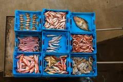 容器用抓住海鱼纤巧布拉内斯 库存照片