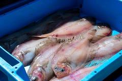 容器用抓住海鱼纤巧异体类 免版税库存图片