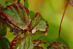 容易的可及性典型的植物在意大利半岛的地中海污点的 免版税图库摄影