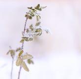 容易的背景编辑图象本质导航冬天 冻结的花 免版税库存照片