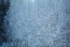 容易的背景编辑图象本质导航冬天 33c 1月横向俄国温度ural冬天 阿尔卑斯包括房子场面小的雪瑞士冬天森林 免版税库存照片