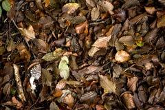 容易秋天的背景编辑图象本质导航 库存照片