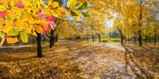 容易秋天的背景编辑图象本质导航 免版税图库摄影