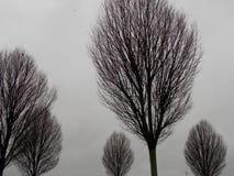 容易编辑图象对结构树向量冬天 免版税库存图片
