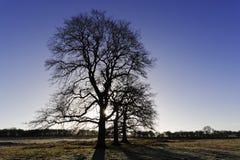 容易编辑图象对结构树向量冬天 免版税库存照片