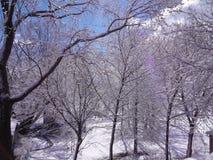 容易编辑图象对结构树向量冬天 免版税图库摄影