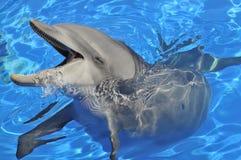 宽吻海豚题头 库存照片