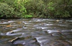 宽小河和春天成长 库存图片