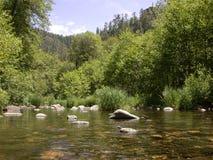 宽小河的橡木 免版税库存照片