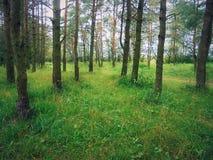 宽敞森林 库存图片