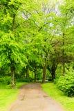 宽敞的自然公园 图库摄影