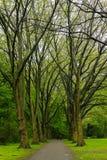 宽敞的自然公园 免版税图库摄影