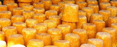 宽棕榈糖 免版税图库摄影