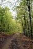 宽路在森林里 库存照片