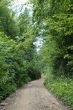 宽路在森林里 库存图片