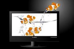 宽银幕lcd的监控程序 免版税库存照片
