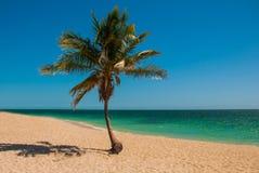 宽,沙滩全景在一个热带海岛上的有可可椰子树的 Playa肘美丽的海滩在特立尼达, Cub附近的 免版税库存图片