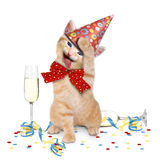 宿酒,在党以后的猫 免版税库存图片