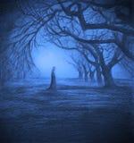 寂寞在暮色森林里 库存图片