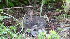 寂静的小兔 库存图片
