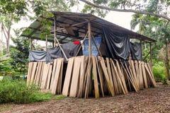 寄宿, Cuyabeno野生生物储备, Sucumbios省,南ame 免版税图库摄影
