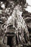 寄生生物prohm ta结构树 库存图片