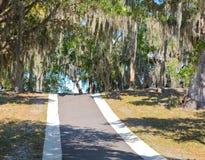 寄生藤铁兰垂悬在头顶上从ive橡木栎属Virginiana的Usneoides在菲利普公园,安全港口,佛罗里达 免版税库存图片