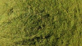 寄生虫上升并且在一个绿色领域上转动用夏天草本和花 影视素材