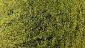 寄生虫上升并且在一个绿色领域上转动用夏天草本和花 股票录像