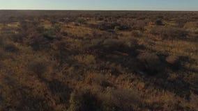 寄生虫从上面采取观点在大草原 股票视频