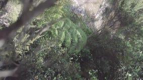 寄生虫向后飞行并且碰撞入树4k 股票视频