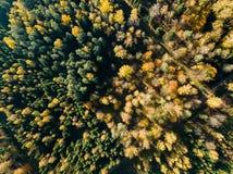 寄生虫图象 乡区鸟瞰图与领域和森林的我 免版税库存图片