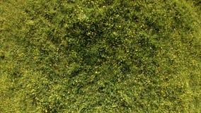 寄生虫在一个绿色领域上上升用夏天草本和花 迟缓地 股票录像