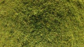 寄生虫在一个绿色领域上上升用夏天草本和花 股票视频