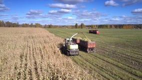 寄生虫垂悬在组合倾吐的玉米叶子入拖车 股票视频
