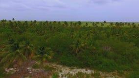 从寄生虫的看法在棕榈树一个巨大的厚实的森林在海岛上的 股票视频