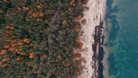 寄生虫英尺长度 波罗的海海岸在一多云秋天天 股票视频