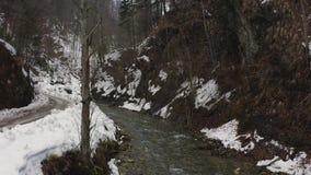 寄生虫跨线桥河和森林 影视素材