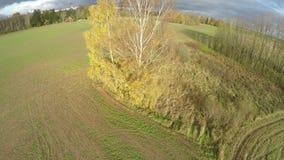 寄生虫飞行在秋天有树和庄稼领域的11月农田 股票录像