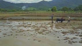 寄生虫飞行接近部族农夫栽种的大米领域 股票视频