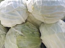 密切注视圆白菜的  免版税库存照片