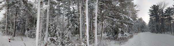 密执安全景冬天的森林 免版税图库摄影