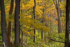 密执安秋天的都市森林 免版税库存图片