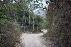 密林从农村小村庄路的风景视图向El伊甸园掠食性动物与阿诺德的电影的巴亚尔塔港墨西哥 库存照片